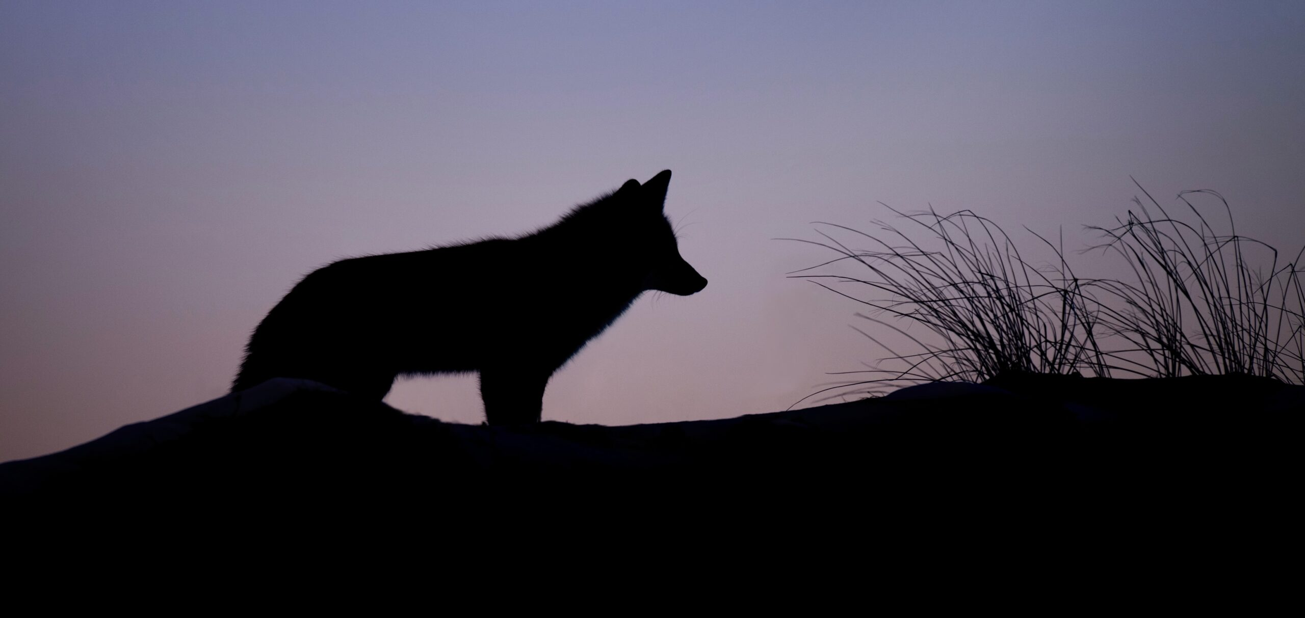 一匹狼でも良いんじゃない?